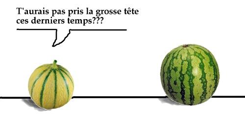Melon VS Pastèque Melon_pasteque