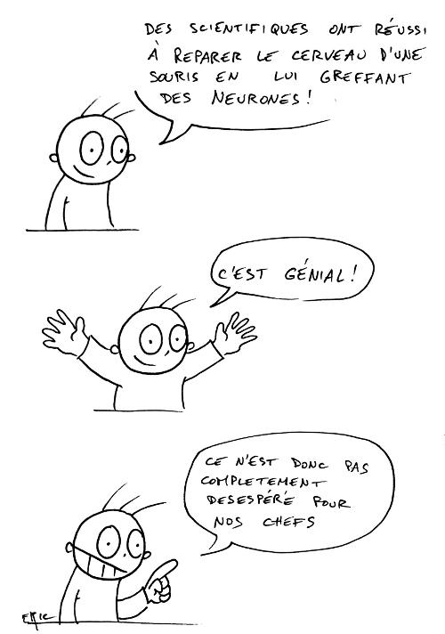chercheur_greffe_cerveau_boulot